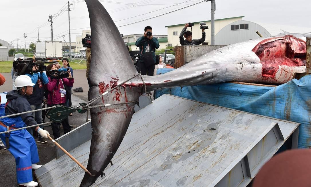 Uma baleia Minke capturada e morta é descarregada de um caminhão em Kushiro; o Japão iniciou sua primeira caça comercial em mais de três décadas no dia 1º de julho de 2019, uma prática que os ambientalistas dizem ser cruel e arcaica Foto: KAZUHIRO NOGI / AFP