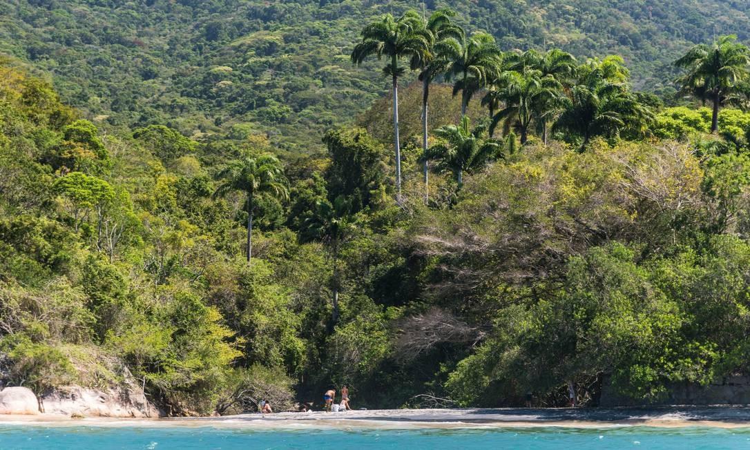 Parque Estadual da Ilha Grande. Florestas ocupam mais de 90% da área Foto: Alex Ferro / Agência O Globo
