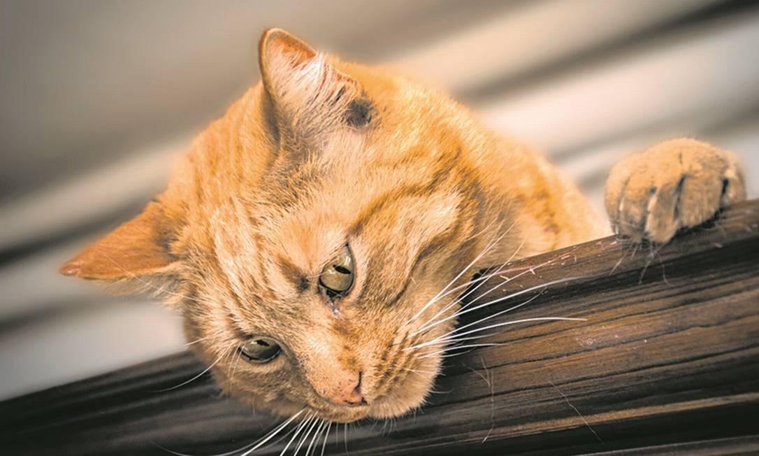 Para impedir um morador de criar um animal doméstico deve-se ter prova concreta de que o bicho traz riscos Foto: Pixabay