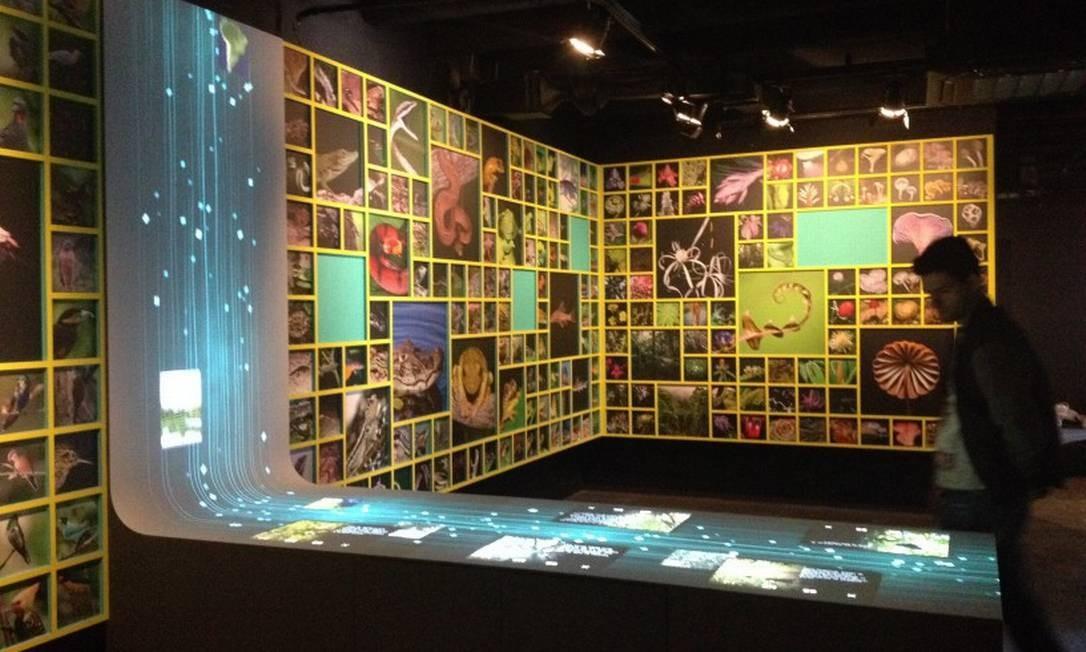 Centro de Visitants Paineiras: exposição permanente, gratuita e interativa Foto: Divulgação