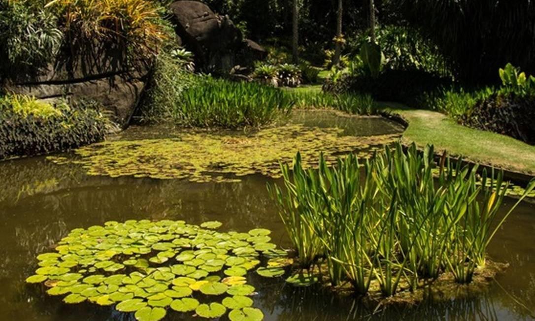 Sítio Roberto Burle Marx: mais de 3,5 mil espécies de plantas Foto: Brenno Carvalho