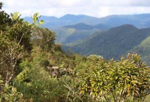 Segundo pesquisador, estudo mostra que reflorestamento é a melhor solução para mudanças climáticas disponível Foto: Pixabay