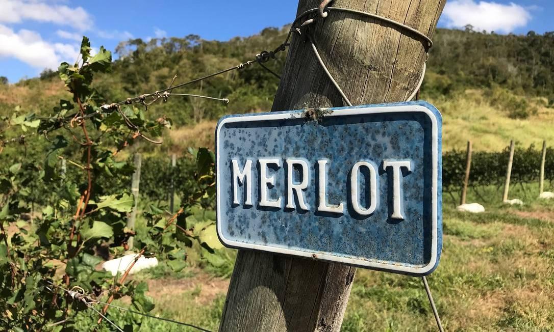Vinhos. Vinícola Inconfidência, a primeira a produzir uvas finas do Rio Foto: Divulgação