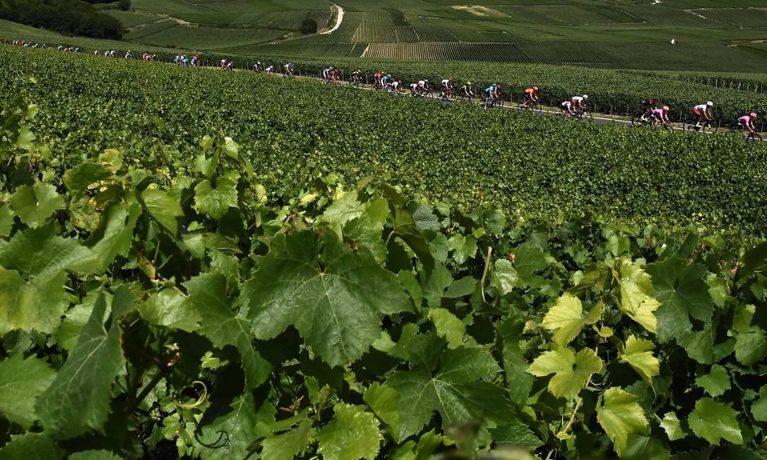Ciclistas pedalam em terra firme cercada por vinhedos durante a terceira etapa da 106ª edição da corrida de ciclismo Tour de France entre Binche e Epernay Foto: JEFF PACHOUD / AFP