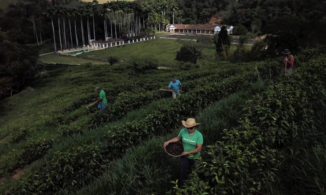 Governo quer incentivar bancos privados a aumentar financiamento agrícola Foto: Custódio Coimbra / Agência O Globo
