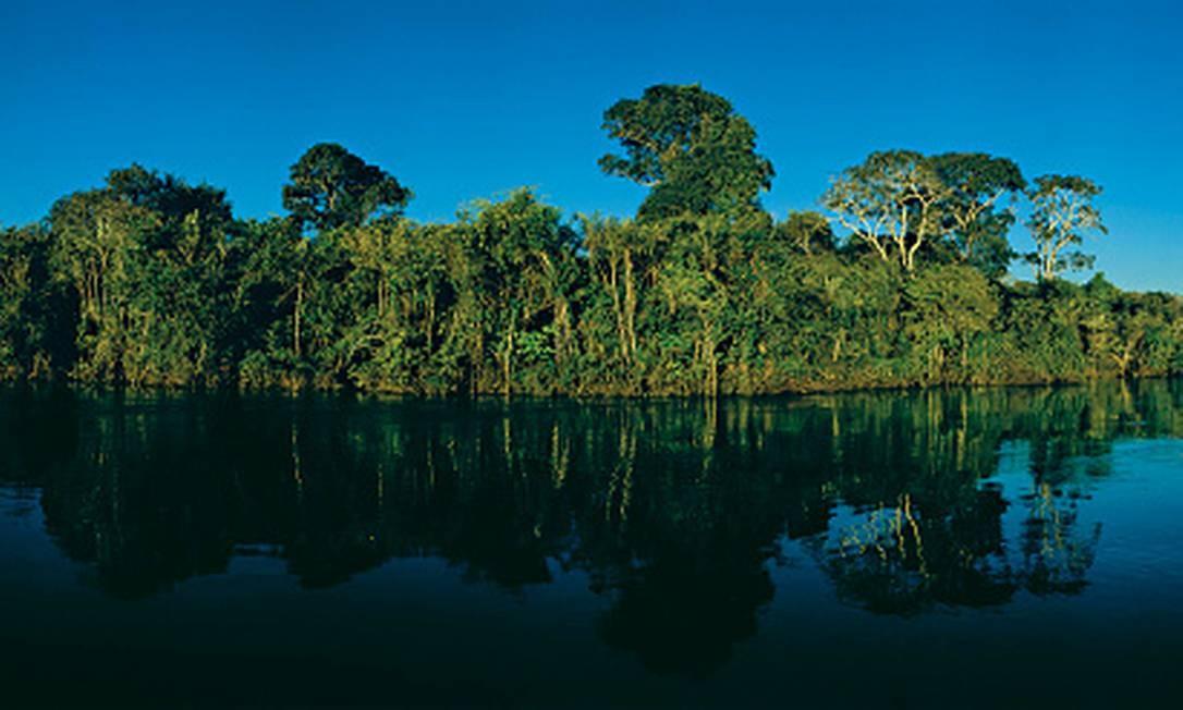 Trecho da Floresta Amazônica no Estado de Tocantins. Foto: Getty Images