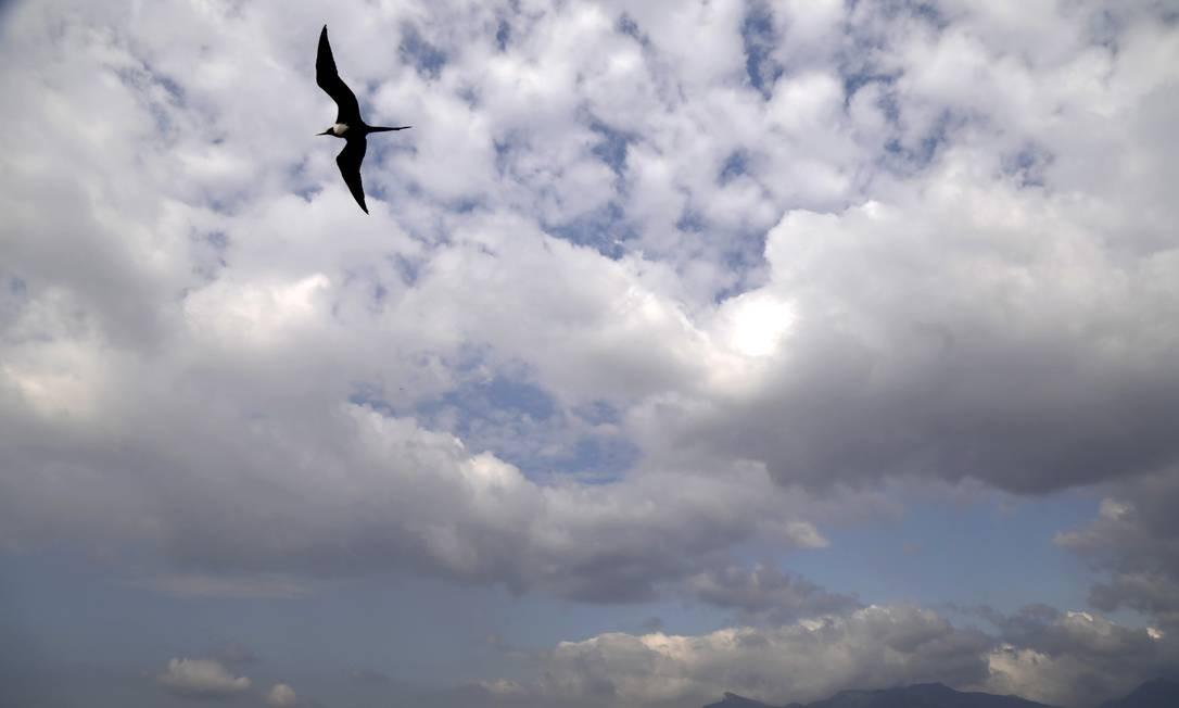 A presença das aves indica que, apesar de toda a poluição na Baía de Guanabara, de toda sujeira, há proliferação de alimentos Foto: Custodio Coimbra / Agência O Globo