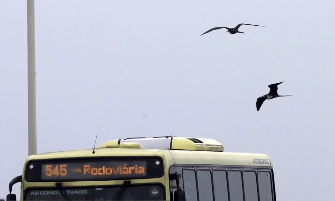 Aves voam perto de ônibus na Ponte Foto: Custodio Coimbra / Agência O Globo