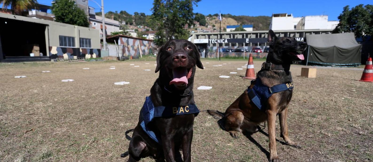 Os cães Fighter e Eros, do BAC (Batalhão de Operação com Cães) que encontraram 8,5 toneladas de drogas , 31 armas , das quais 23 eram fuzis , e 75 granadas , além de munição. Foto: FABIANO ROCHA / Agência O Globo