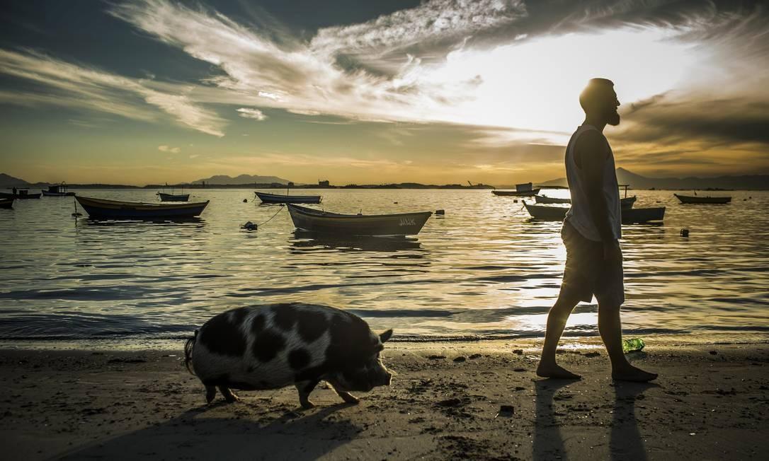 """A porquinha Abigail passeia com seu """"pai"""", Gulherme Lopes, na Praia das Pedrinhas, em São Gonçalo, cidade onde mora, na Região Metropolitana do Rio. Ela tem quase 18 mil seguidores no Instagram Foto: Guito Moreto / Agência O Globo"""