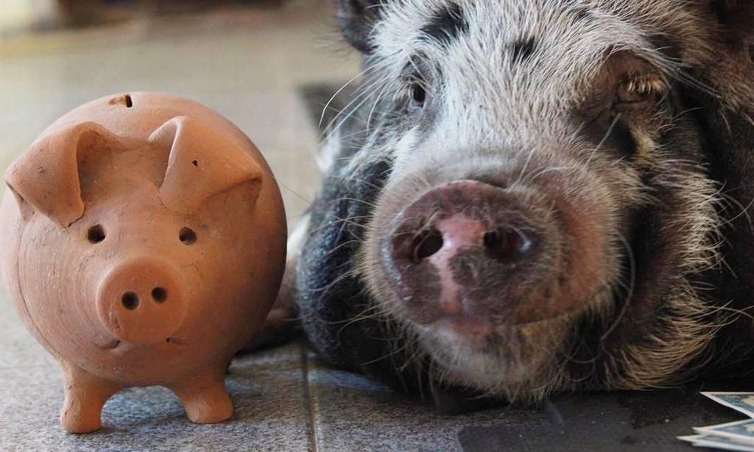 """""""Juntos e shallow now"""", diz post da porquinha que está bombando nas redes sociais Foto: Reprodução / Instagram"""