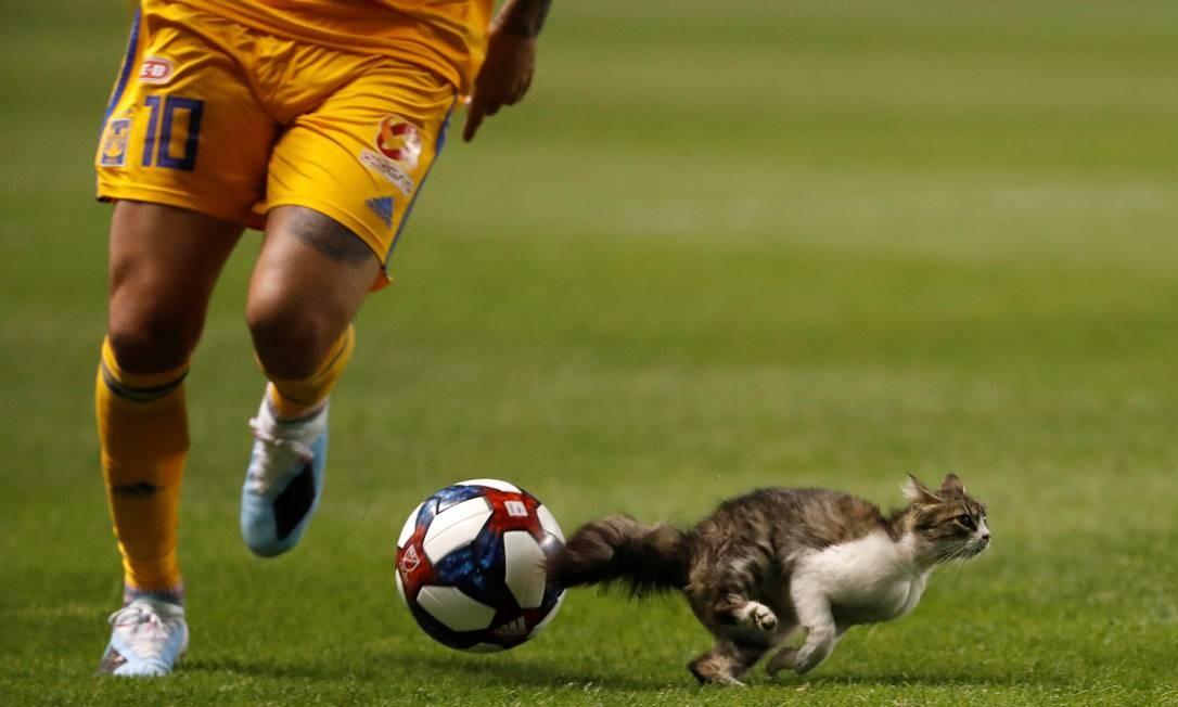 Um gato interrompe a partida no segundo tempo entre o Tigres UANL e o Real Salt Lake durante o jogo da Copa das Ligas, no Estádio Rio Tinto Foto: Jeffrey Swinger / USA TODAY Sports