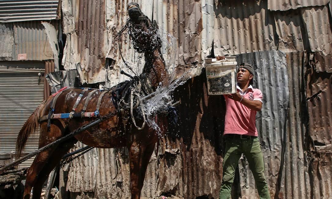 Um palestino lava seu cavalo na cidade de Gaza Foto: MOHAMMED ABED / AFP