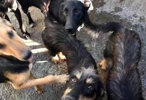 Lar temporário. Alguns dos 26 animais resgatados da casa pela Associação do Cão e Gato