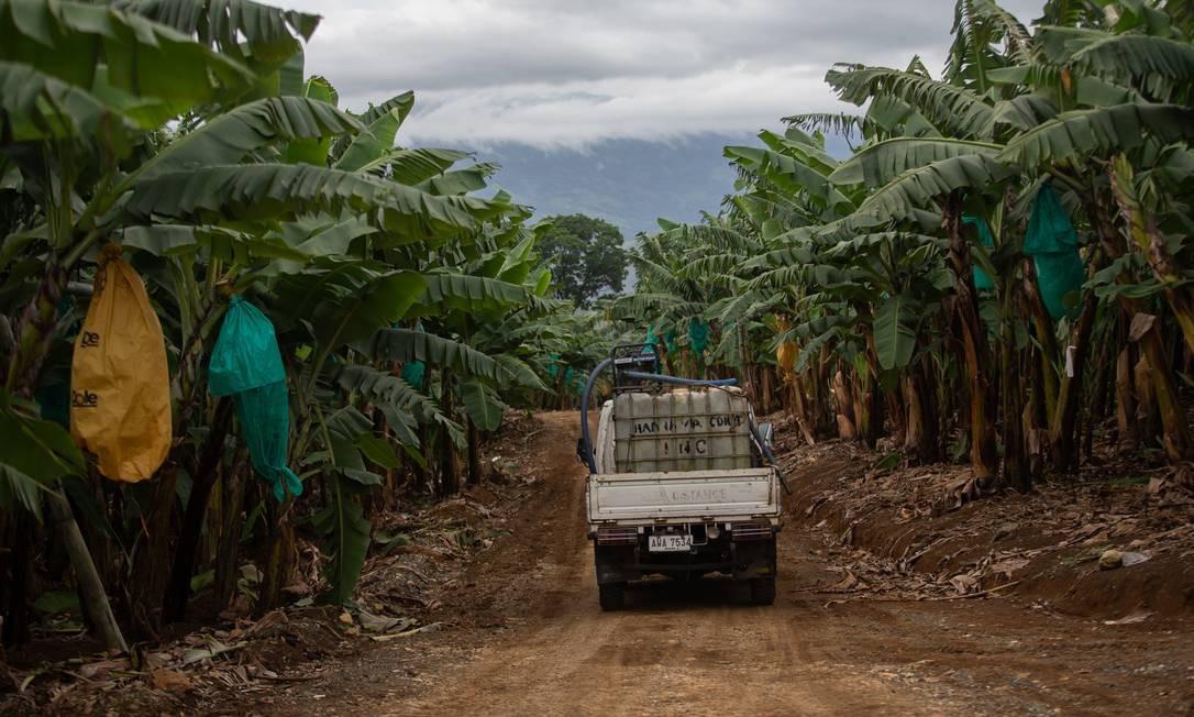 Plantação de banana na vila de San Josí, província de Mindanao, nas Filipinas: país foi o que registrou o maior número de assassinatos de ativistas no ano passado, perseguidos pelo governo de extrema direita do presidente Rodrigo Duterte Foto: Jeoffrey Maitem/Global Witness