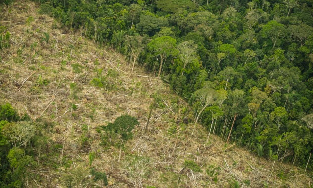 Terra Indígena Karipuna, localizada nos municípios de Nova Mamoré e Porto Velho, no estado de Rondônia, registrada em junho de 2018. Destruição do território tem crescido de forma rápida desde 2015 pela invasão ostensiva de madeireiros e grileiros Foto: Tommaso Protti / Greenpeace