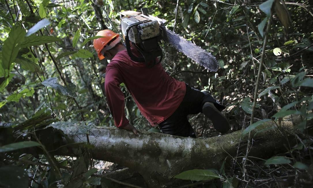 Homem carrega uma motosserra após cortar ilegalmente uma árvore da floresta amazônica virgem dentro do Parque Nacional Jamanxim, perto da cidade de Morais Almeida, no Pará, em 24 de junho de 2013. No acumulado de 2019, de acordo com o Inpe, o Brasil viu uma redução de aproximadamente 1,5 vez o território da cidade de São Paulo: 2.273,6 km². Pior registro desde 2016 Foto: NACHO DOCE / REUTERS