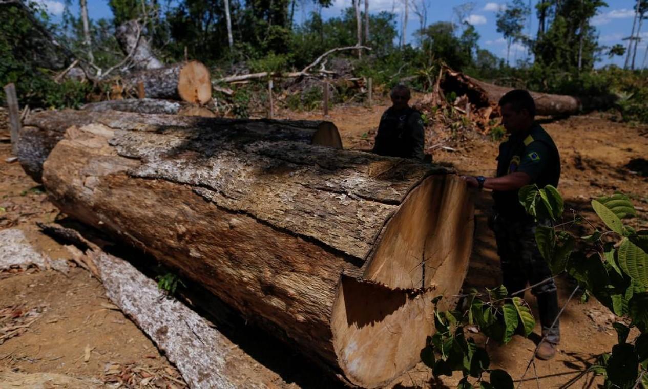 """Agentes Ibama verificam árvore derrubada em área desmatada durante a """"Operação Onda Verde"""" para combater a extração ilegal de madeira em Apui, região sul do Amazonas, em agosto de 2017 Foto: BRUNO KELLY / Agência O Globo"""
