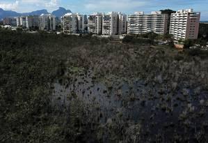 Parte da floresta está morta, com árvores secas. Áreas sem vegetação chamam a atenção, e especialistas dizem que é preciso tomar providências urgentemente Foto: Custódio Coimbra / Custódio Coimbra