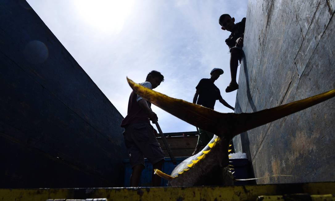 Trabalhadores carregam um caminham de atum em um porto de pesca em Banda Achém, Indonésia Foto: CHAIDEER MAHYUDDIN / AFP