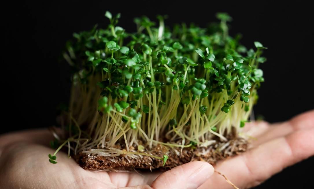Broto de agrião produzido pela Mighty Greens Foto: Divulgação