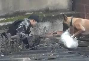 A cadela Maia na laje da casa onde estavam escondidas as drogas Foto: Reprodução de vídeo