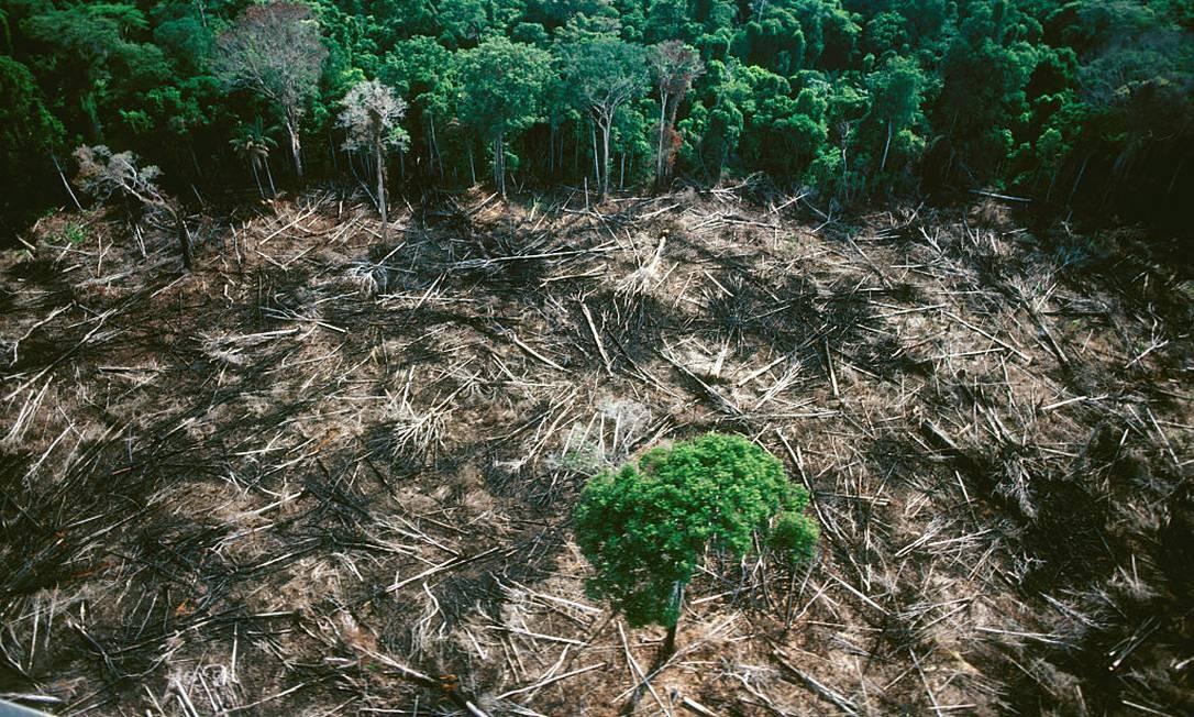 Desmatamento na Amazônia Foto: COLLART Hervé / Sygma via Getty Images