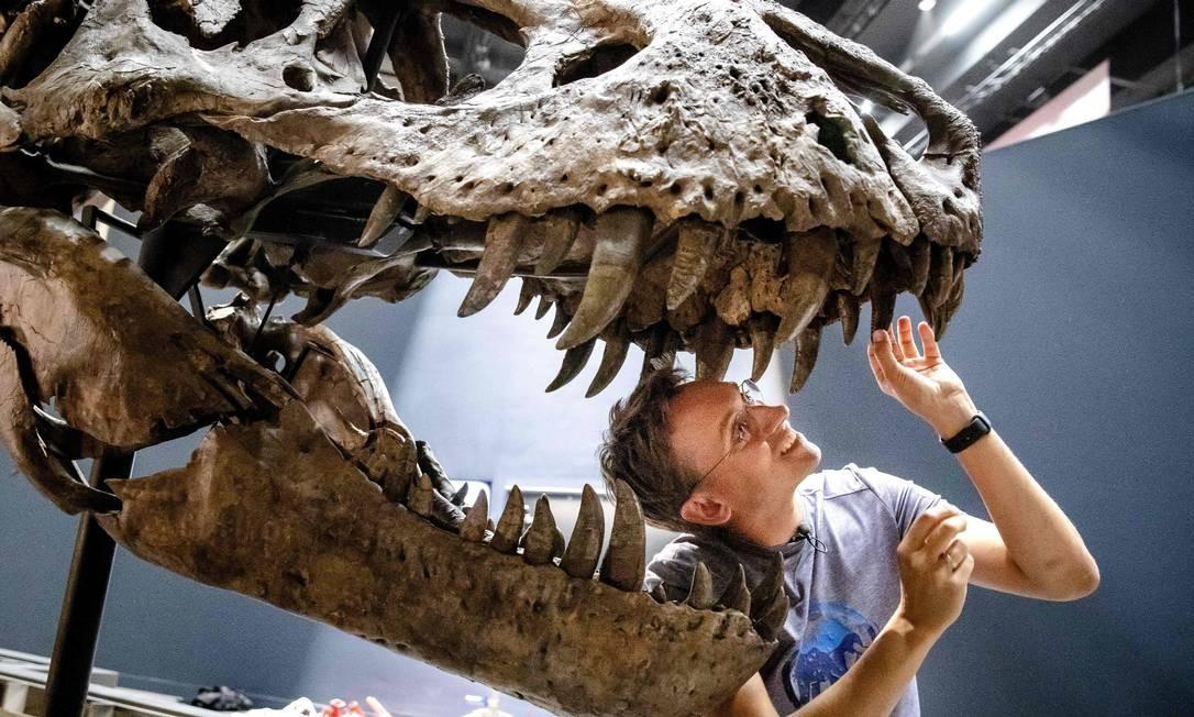 A paleontóloga Anne Schulp trabalha na construção do esqueleto de um tiranossauro rex, em Leiden, Holanda, que ficará em exposição em novo museu Foto: BART MAAT / AFP