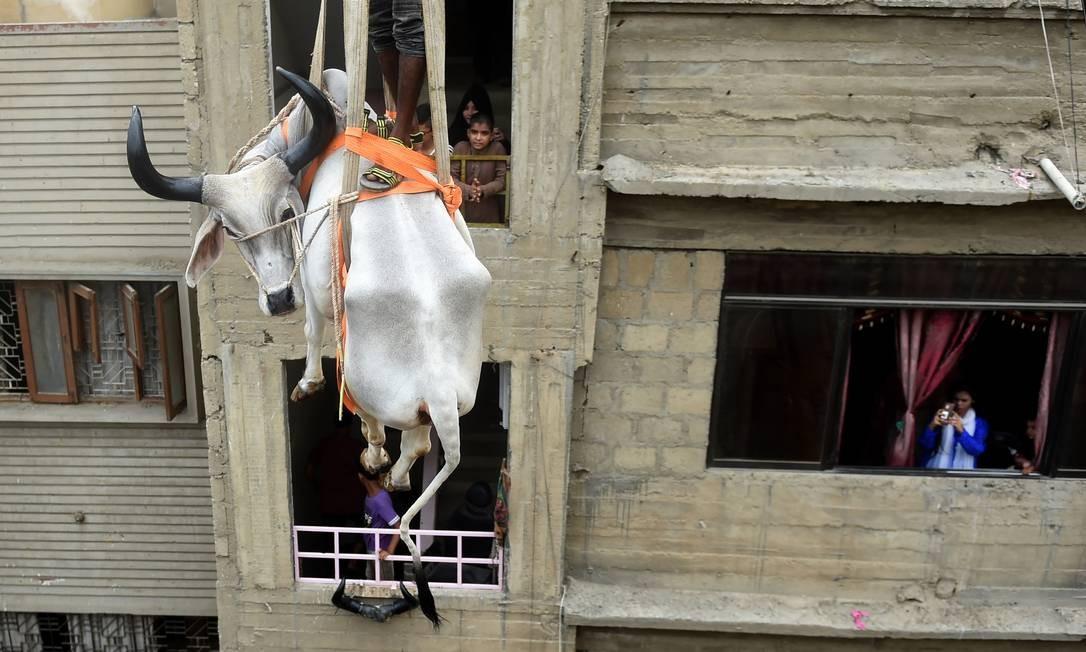 Moradores paquistaneses observam um guindaste erguer um touro do telhado de um prédio em preparação para o festival anual muçulmano do Eid al-Adha ou o Festival do Sacrifício, em Karachi. Quase meio milhão de vacas, cabras e outros animais serão vendidos ou sacrificados durante o feriado de Eid al-Adha Foto: RIZWAN TABASSUM / AFP