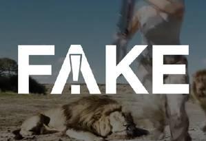 É #FAKE que vídeo que mostra caçadores tirando fotos com animal morto foi encontrado após leão atacá-los Foto: Reprodução