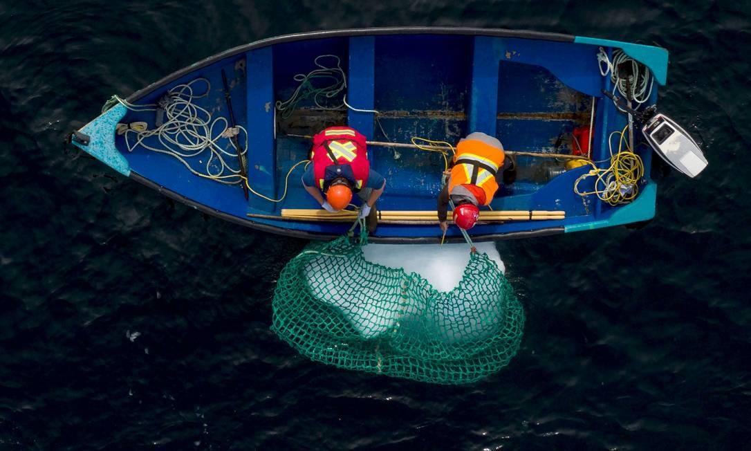 Tripulantes capturam um pedaço de iceberg Foto: JOHANNES EISELE / AFP
