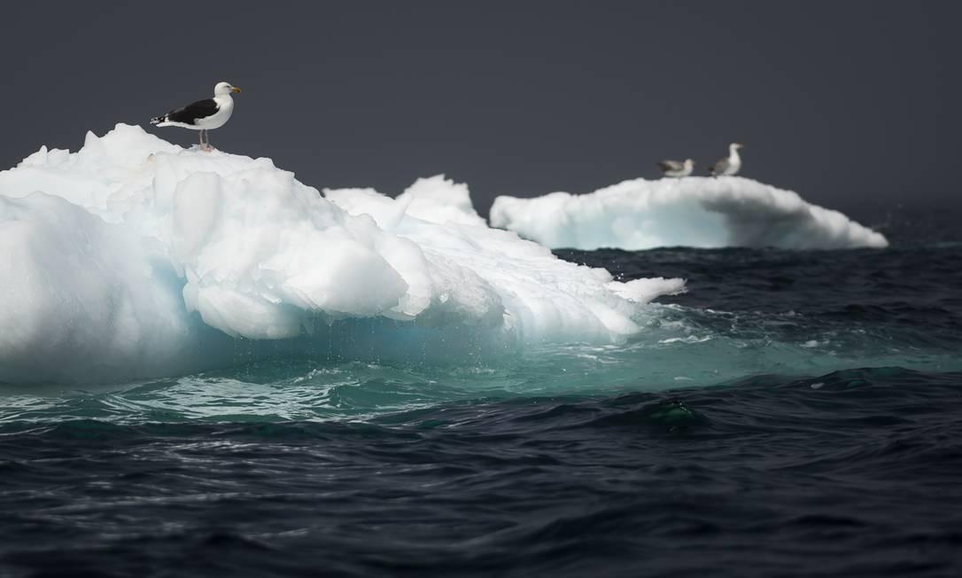O crescimento de icebergs no Canadá é um dos sintomas da aceleração da mudança climática no Ártico, que aquece três vezes mais rápido que o resto do mundo Foto: JOHANNES EISELE / AFP