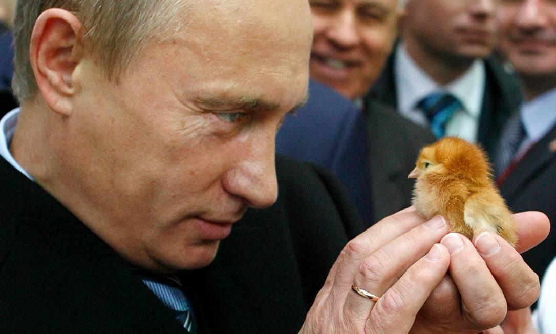 Putin durante sua visita a uma exposição agrícola em Rostov do Don Foto: ALEXEY DRUZHININ / AFP