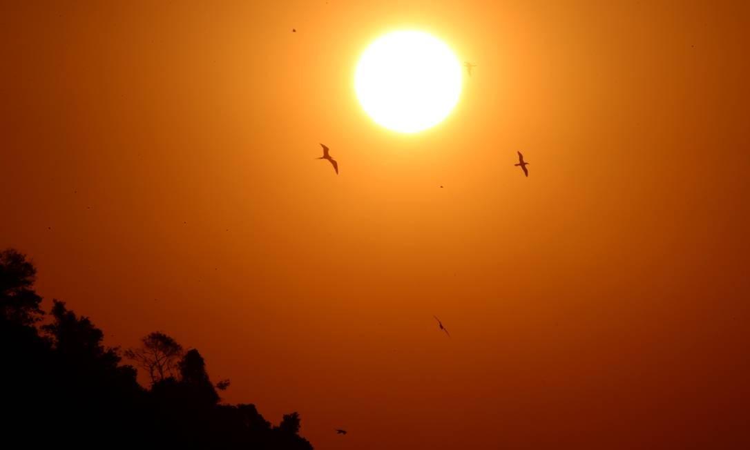 Gaivotas voam no céu e parecem emoldurar o sol Foto: Fabiano Rocha / Agência O Globo