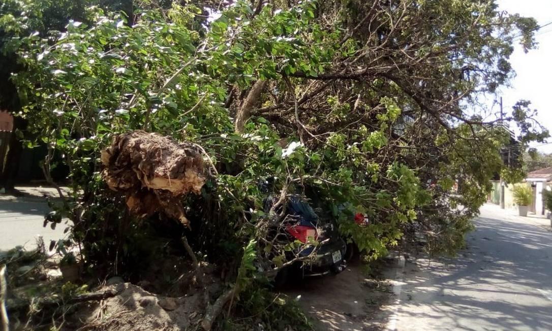 Árvore cai na Rua Pacheco Leão, no Jardim Botânico Foto: Centro de Operações Rio / Divulgação