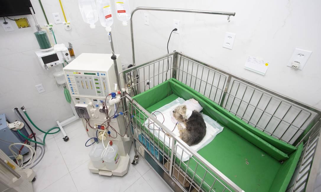 O hospital tem dois centros cirúrgicos, quatro setores de internação e laboratório Foto: Bruno Kaiuca / Agência O Globo