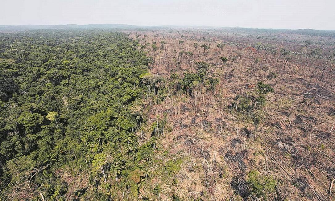 Fundo banca monitoramento feito pelo Imazon, instituto que revelou ontem aumento de 15% do desflorestamento de agosto de 2018 a julho passado Foto: Andre Penner/AP/15-9-2009