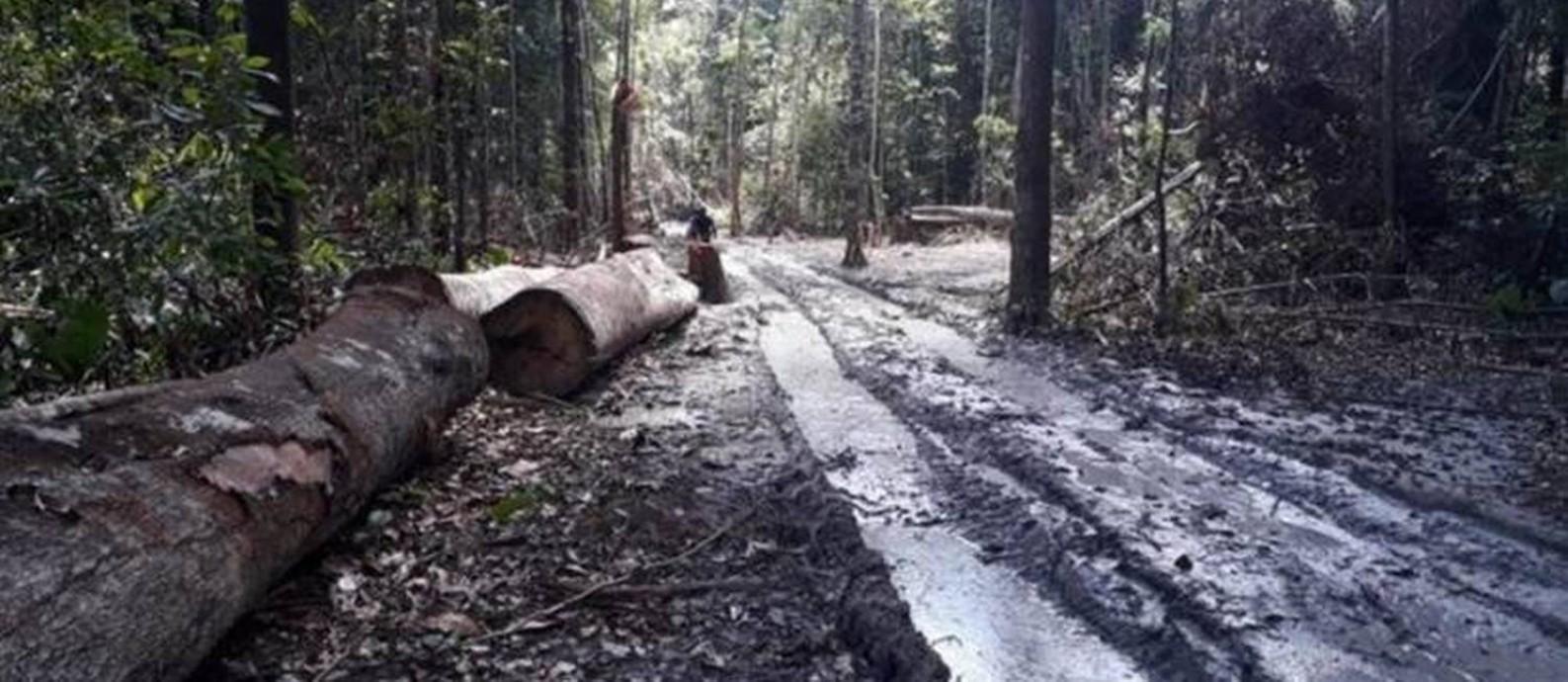 Desmatamento na Amazônia seria o dobro do registrado pelo Inpe, diz universidade americana Foto: Agência Pará