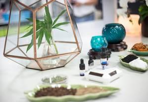 Folhas de cannabis na Tailândia Foto: SOPA Images / SOPA Images/LightRocket via Gett