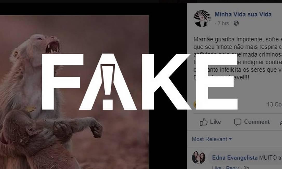 É #FAKE que foto mostra macaco morto em queimada no Brasil Foto: Reprodução/Facebook