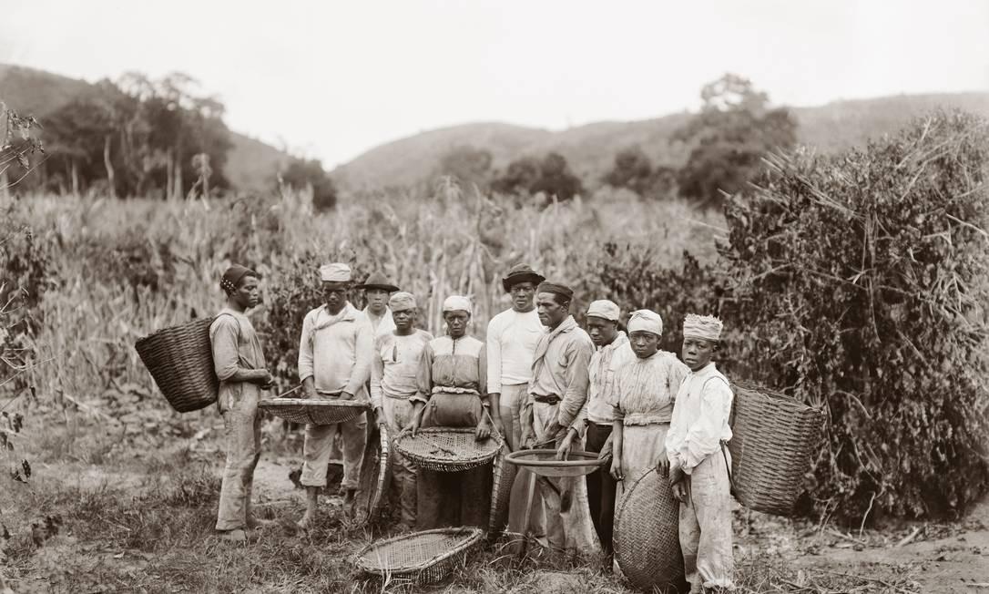 Marc Ferrez. Escravos na colheita de café, c. 1882. Vale do Paraíba, RJ / Acervo IMS Foto: Marc Ferrez / Acervo IMS