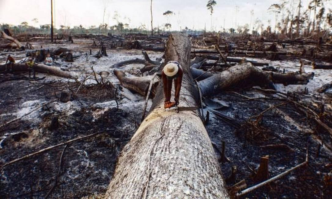 Queimadas na Floresta Amazônica Foto: Ricardo Funari/Getty Images