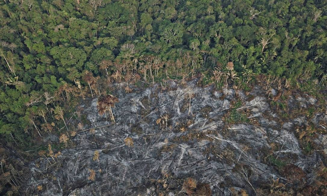 Área atingida por queimadas em Rondônia Foto: Arquivo pessoal