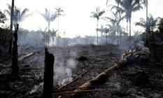 Um tronco carbonizado é visto em um trecho da selva amazônica. Foto: BRUNO KELLY 20/08/2019 / Reuters
