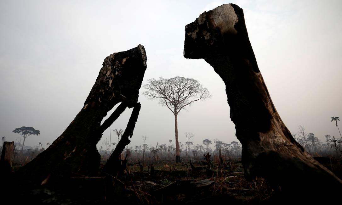 Um peaço da selva amazônica visto após um incêndio em Boca do Acre, no estado do Amazonas Foto: BRUNO KELLY / REUTERS / 24/08/2019