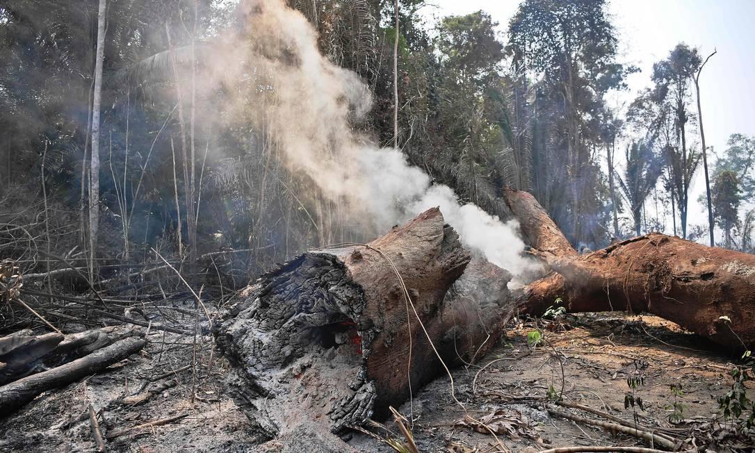 Fumaça sai de um tonco de uma árvore destruída por uma queimada nos arredores de Porto Velho Foto: CARL DE SOUZA / AFP