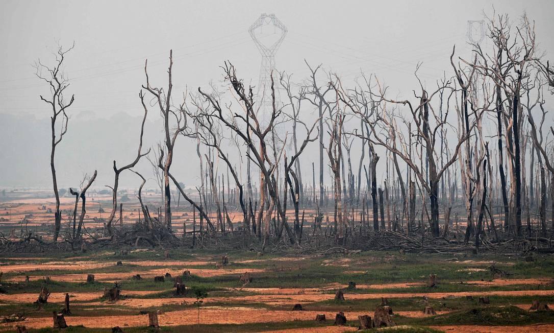 Área atingida por incêndio em Boca do Acre, Amazonas Foto: CARL DE SOUZA / AFP / 24/08/2019
