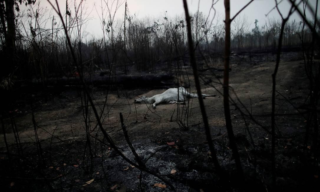 Uma vaca morta em um trecho da floresta amazônica devastado pelas chamas em Porto Velho Foto: UESLEI MARCELINO / REUTERS / 24/08/2019