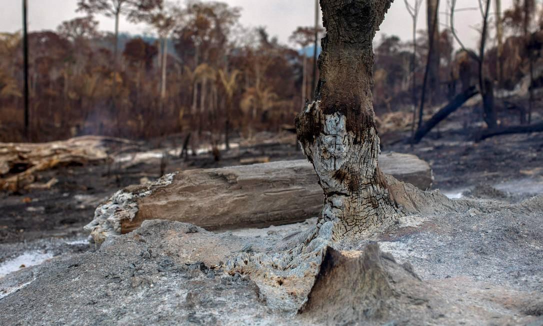 Área queimada após um incêndio na floresta amazônica perto de Novo Progresso, Pará Foto: JOAO LAET / AFP / 25/08/2019