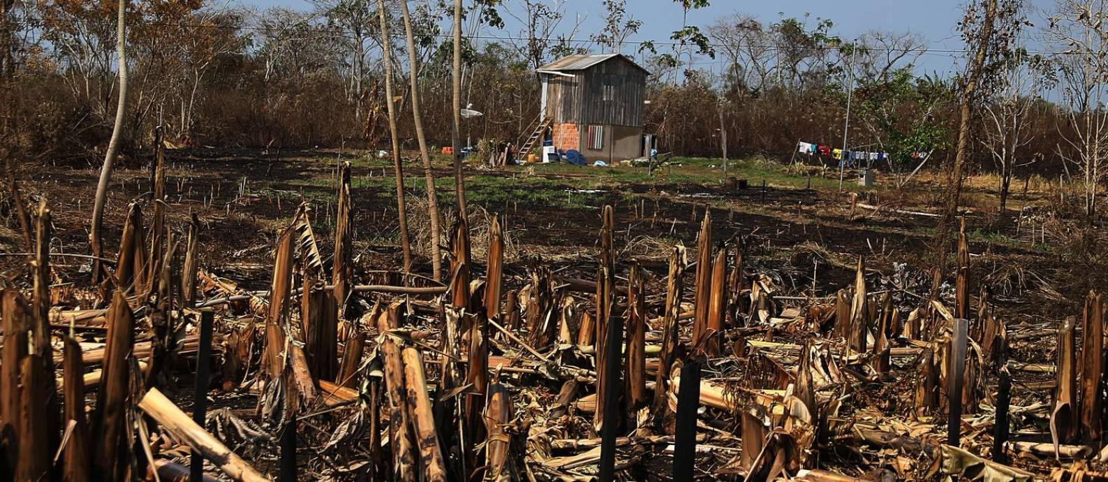 Casa resiste a destroços de uma queimada, no Km 143 da rodovia que liga Rio Branco a Xapuri, no Acre Foto: Jorge William / Agência O Globo